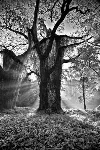_tib7867_el-rey-del-bosque_